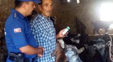 Antalya Elmalı'da Keçi Hırsızlığına 8 Gözaltı