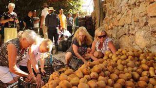 Antalya'da Kivi Hasadında Turistler Sıraya Girdi!