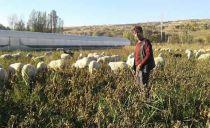 Isparta'da Hayvan Otlatan Çobanın Sır Ölümü!