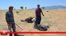 Korkuteli'de 25 Küçükbaş Hayvan Telef Oldu